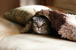 cat-hiding-under-blanket